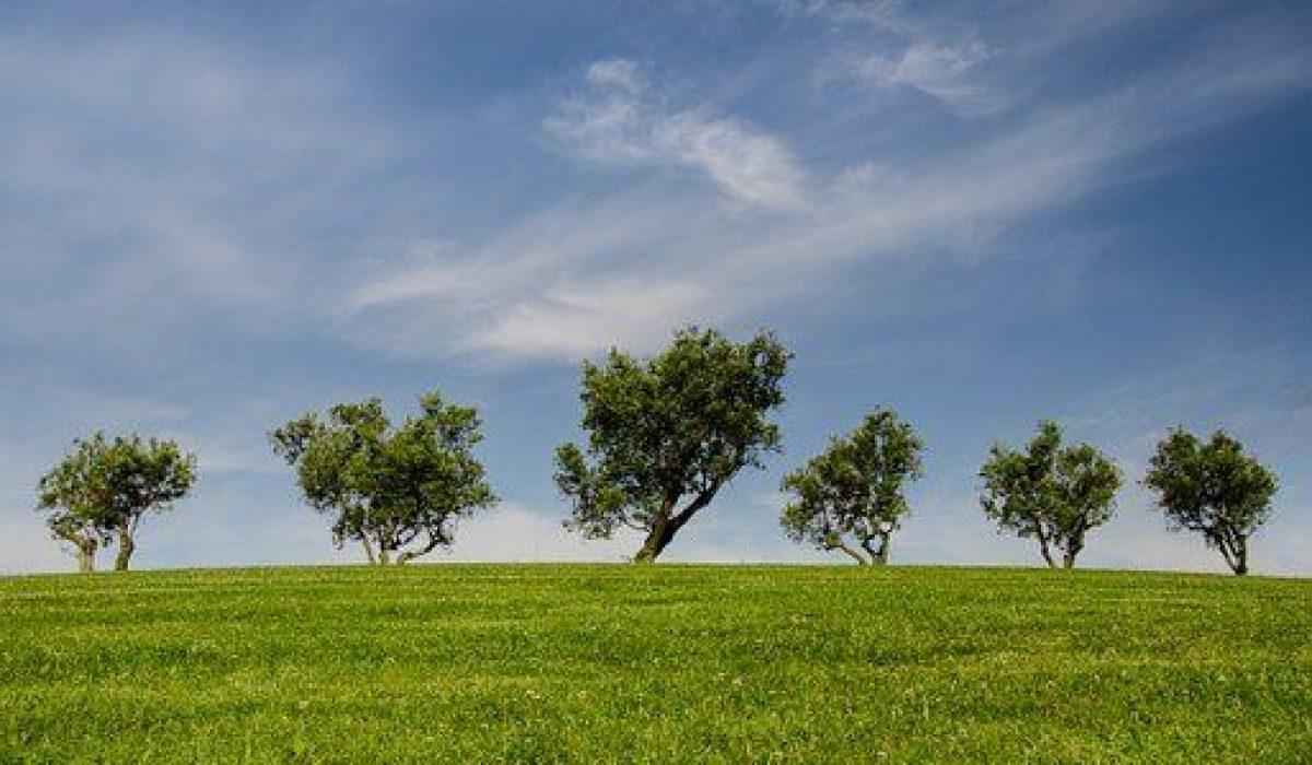 trees-790220-340